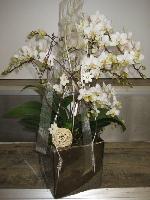 Die schönsten Orchideen
